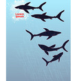 Template poster design with hand-drawn sharks vector image