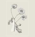 vintage botanical flower flower vector image vector image