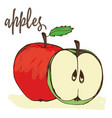 apples hand painted vector image vector image