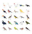 birds flat icons pack vector image