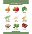 High fiber foods infographics vector image