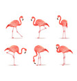 red and pink flamingo set vector image vector image