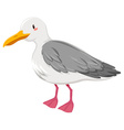 Seagull with gray and white feather vector image