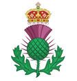 thistle symbol of scotland vector image