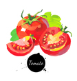 Tomato set Hand drawn sketch watercolor acrylic vector image vector image