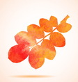 Orange watercolor dog-rose leaf vector image