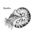 nautilus cephalopod vector image vector image