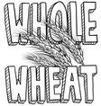 Whole wheat vector image vector image