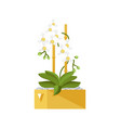 flower in pot isolated icon vector image vector image