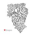 hand drawn fruit decoration vector image
