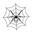 spider on cobweb isolated on white background vector image