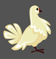 white pigeon and dove bird with fluffed feathers vector image