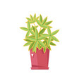 beautiful flower in pot isolated icon vector image vector image