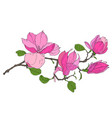branch with magnolia flowers vector image vector image