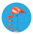 pink flamingo animal tall wading bird vector image