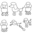 set of poodle vector image