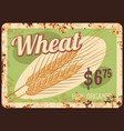 wheat metal rusty plate cereals and grain food vector image vector image