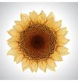 sunflower Flower element for design vector image vector image