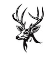 deer stylized drawing vector image vector image
