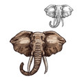 elephant isolated sketch of african mammal animal vector image vector image