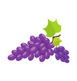 grapes cartoon vector image