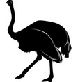 silhouette of a bird ostrich isolated on white bac vector image