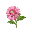 Aster Hand Drawn Realistic vector image vector image