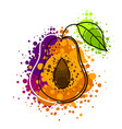 plum drawing watercolor isolated on white vector image