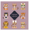 collection of cute felines vector image vector image