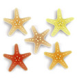 colorful starfish set in white background vector image vector image