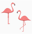 flamingo set pink exotic tropical bird vector image
