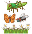 isolated picture different bugs vector image vector image