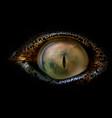 crocodile eye macro vector image vector image