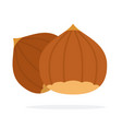 hazelnuts in shell vector image