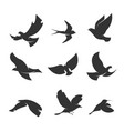 set silhouettes birds in motion on a white vector image