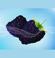 tasty ripe blackberry in clean water vector image vector image