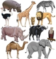 wild animals from African continent vector image vector image