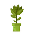 Home plant in pot isolated icon vector image