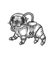 pug puppy in armour space suit engraving vector image vector image