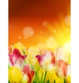 Tulip field under sunset sky EPS 10 vector image