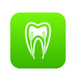 tooth cross section icon digital green vector image vector image