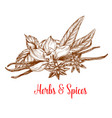 herbs and spices sketch with mint vanilla anise vector image vector image