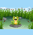 cute frog on the rock vector image vector image