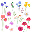 decorative set wild flowers and plants vector image vector image