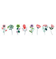 set differents flowers decoration on white vector image