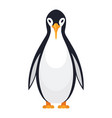 standing penguin bird vector image