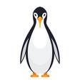 standing penguin bird vector image