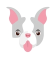 cute bulldog isolated icon vector image vector image