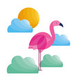 flamingo clouds sun tropical bird feather vector image