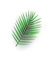 tropical palm leaf macarthurs palm on memphis vector image